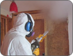 mold removal belleville il